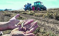 Legumbres, la semilla del despegue rural alavés