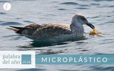 Microplástico, palabra del año 2018