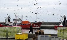 El puerto de Ondarroa lidera la descarga de sardina y anchoa de la flota de bajura