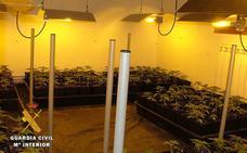 Tres detenidos en Bizkaia tras desmantelarse una factoría de marihuana en Las Merindades