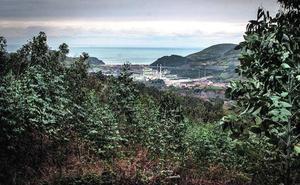 La empresa de la «tala salvaje» de Abanto abonó 66.000 para restaurar el bosque