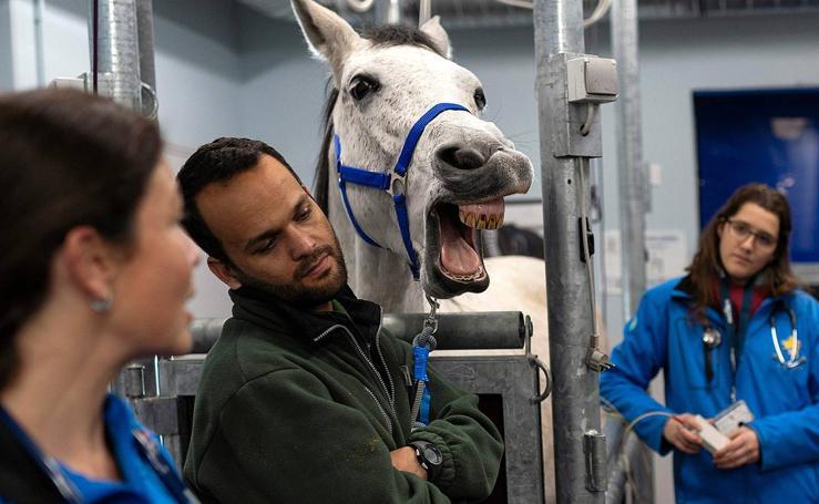 Hospital para caballos