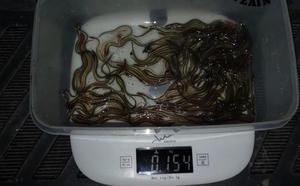 Tres personas, sancionadas por pescar angulas de forma ilegal en Erandio y Pobeña
