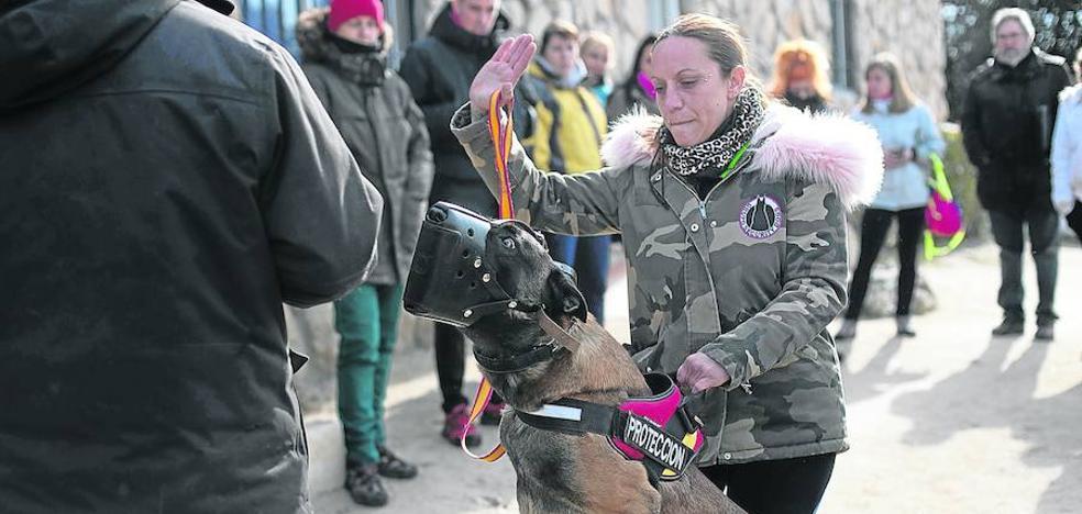 A cara de perro contra el maltratador