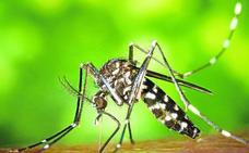 Los mosquitos que propagan graves enfermedades aterrizan en Euskadi