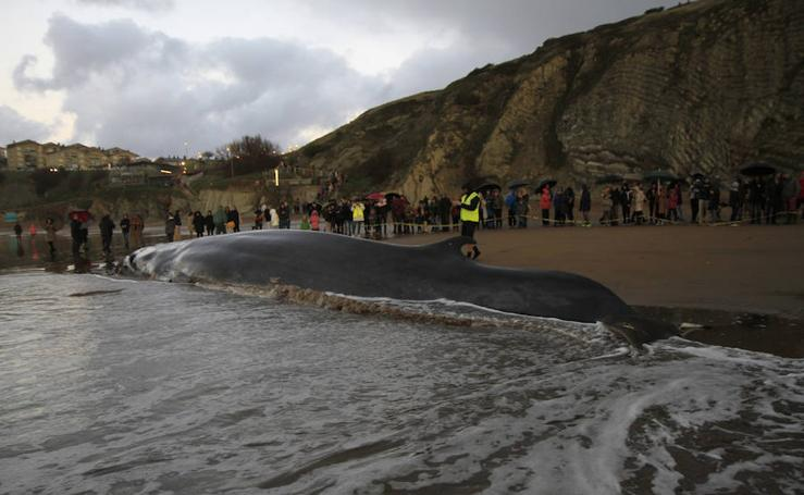 El largo viaje de la ballena de Sopela