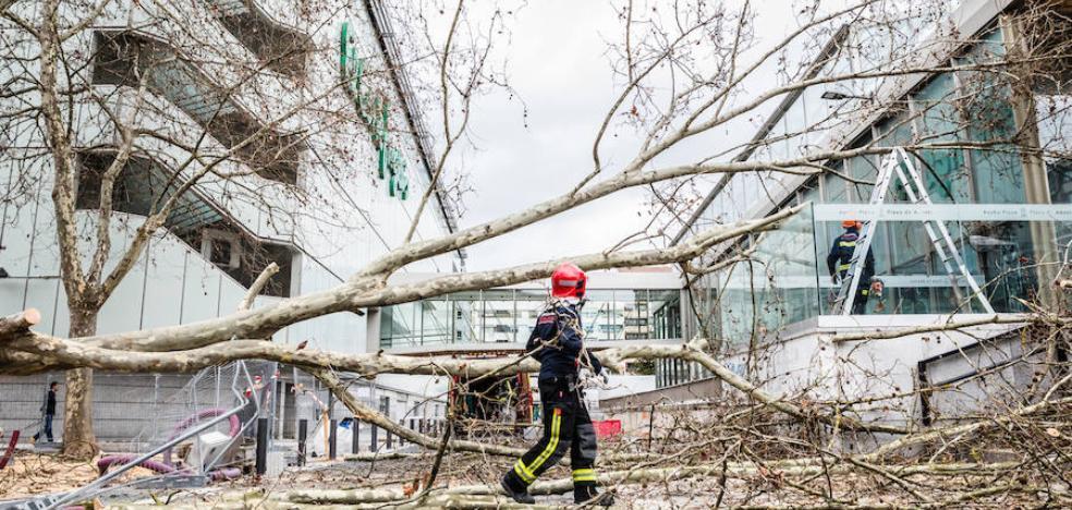 Un árbol se desploma en la calle Jesús Guridi en pleno vendaval