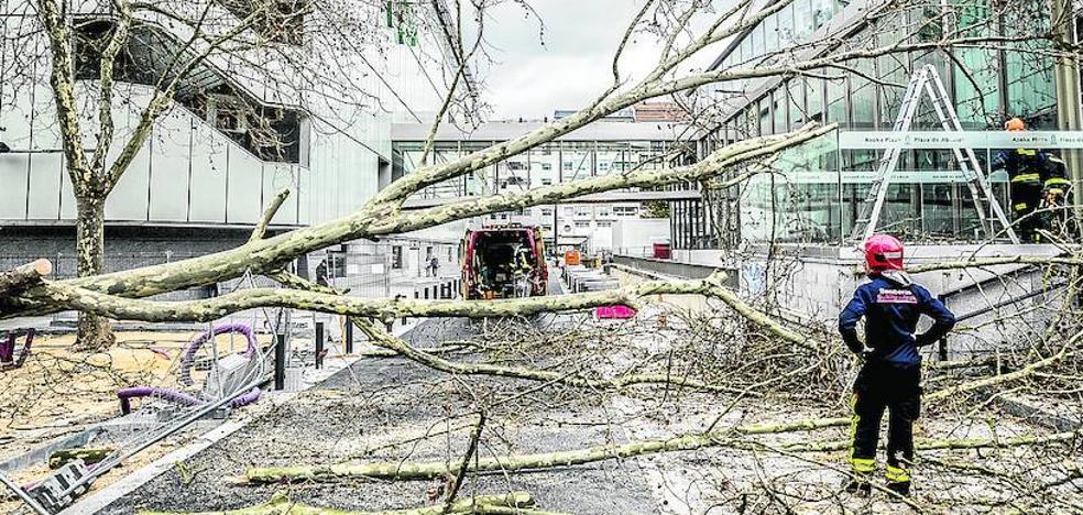 Vitoria cambiará cuatro árboles de la plazuela de El Corte Inglés para evitar su caída