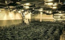 Las eléctricas, contra la marihuana