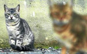 Voluntarios urgen a que se atienda a los animales callejeros en Basauri los fines de semana