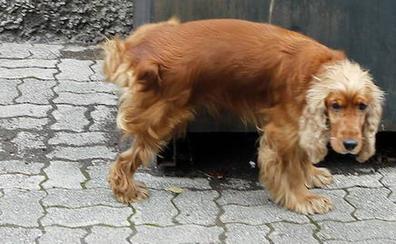 Multas de hasta 1.500 euros por no limpiar la orina de los perros en Palma