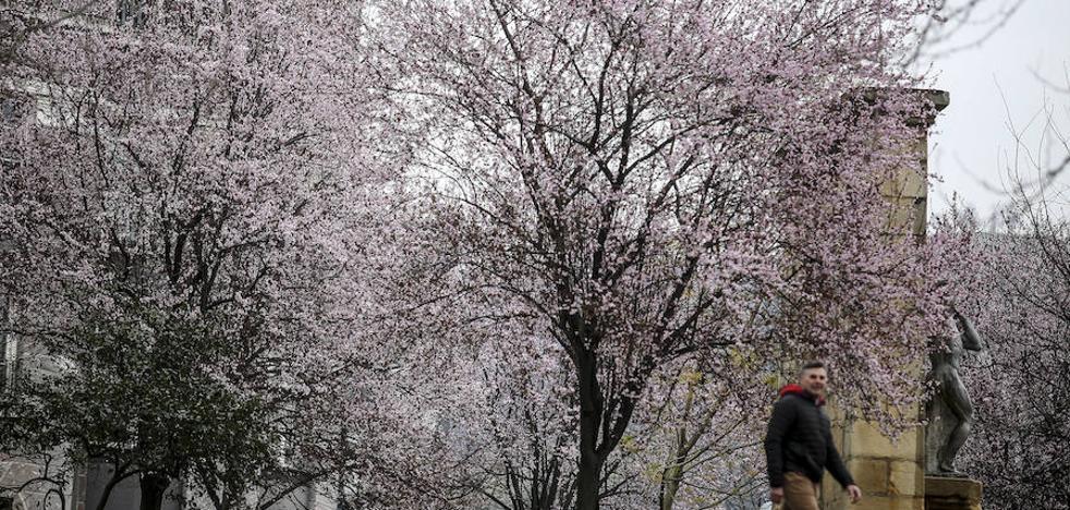 Bizkaia florece antes de tiempo