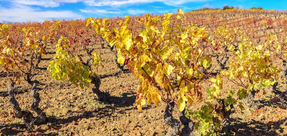 Rioja Alavesa afronta el reto de posicionar su marca en el exterior