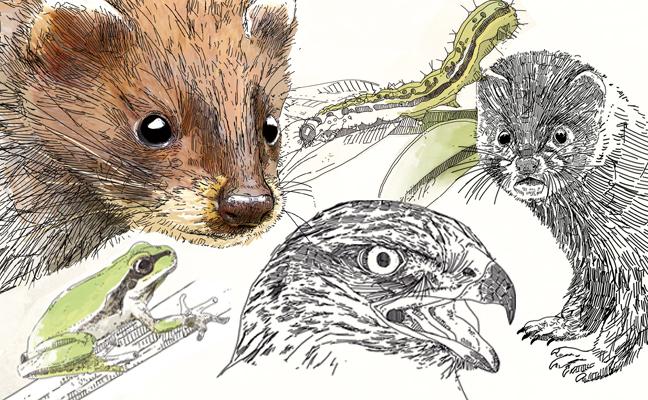 La destrucción de hábitats y la fauna invasora empujan a la extinción a 24 especies
