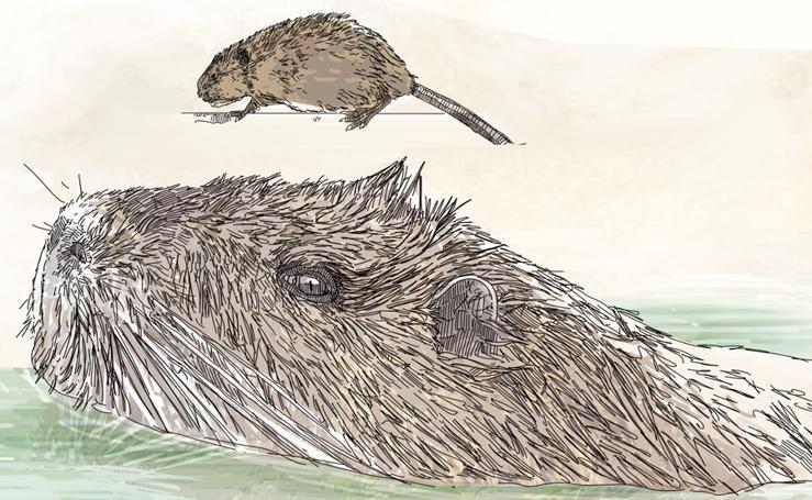 Principales especies amenazadas e invasoras en Euskadi