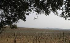 La Ruta del Vino de Rioja Alavesa, pregonera de San Prudencio