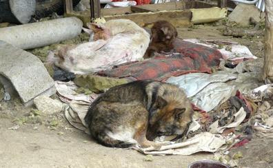Multa de 900 euros a un vecino de Elvillar por maltrato animal