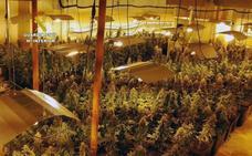 Detenidos 5 vizcaínos por una plantación de marihuana con 1.140 plantas cerca de Castro