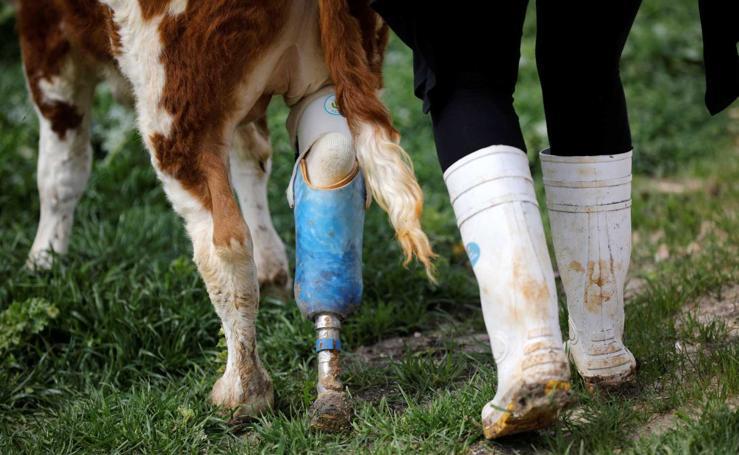 Freedom Farm, un refugio para animales