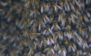 Un hombre de 73 años es atacado por abejas de varios enjambres en Barakaldo