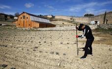 Santa Gadea se adentra en el cultivo de lavanda