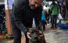 «De andares elegantes y llamativa», así es Noa, la ganadora del concurso canino de Güeñes