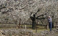 Doce lugares para disfrutar de las flores de los cerezos