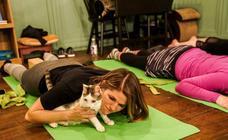 Los gatos también hacen yoga