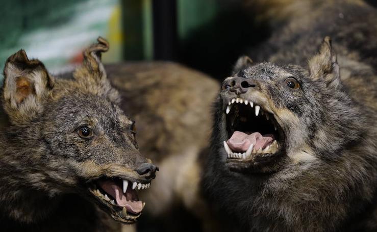 Descubre las especies del Museo de Ciencias Naturales de Bizkaia