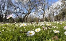 La primavera comienza este miércoles a las 22:58 horas y durará 92 días