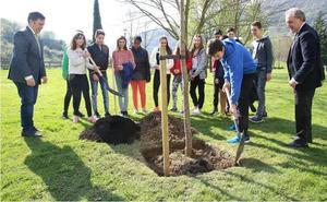 «Los árboles son nuestro mejor filtro del aire»