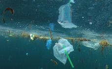 Un estudio confirma que las aves del Golfo de Bizkaia ya ingieren plásticos