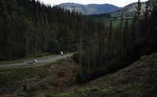 El Gobierno vasco alerta de que la 'peste del pino' se ha duplicado en Euskadi este invierno