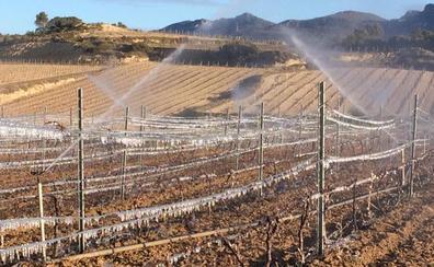 La primera helada de la primavera daña el viñedo y deja en alerta a los viticultores