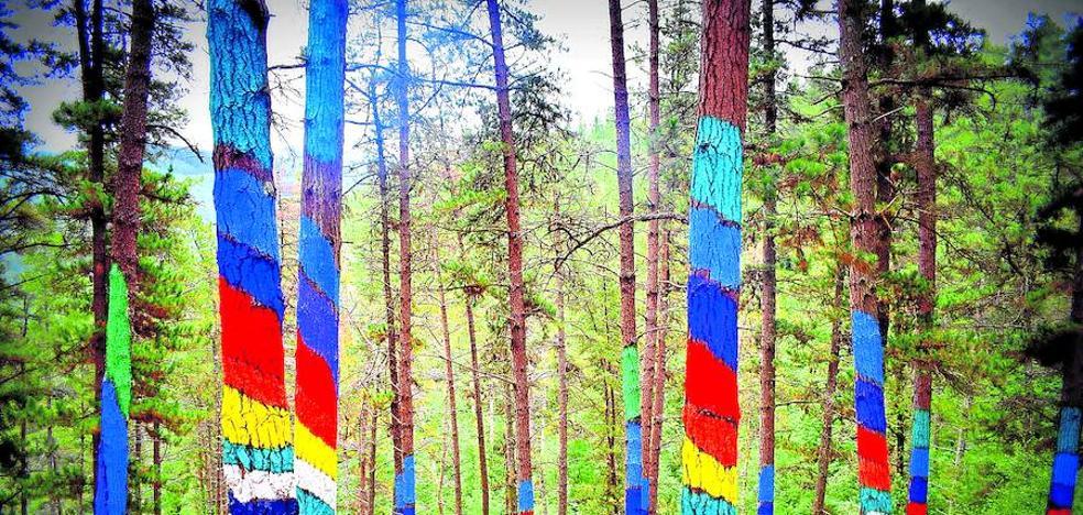 La 'peste de los pinos' amenaza el Bosque de Oma, cerrado desde noviembre