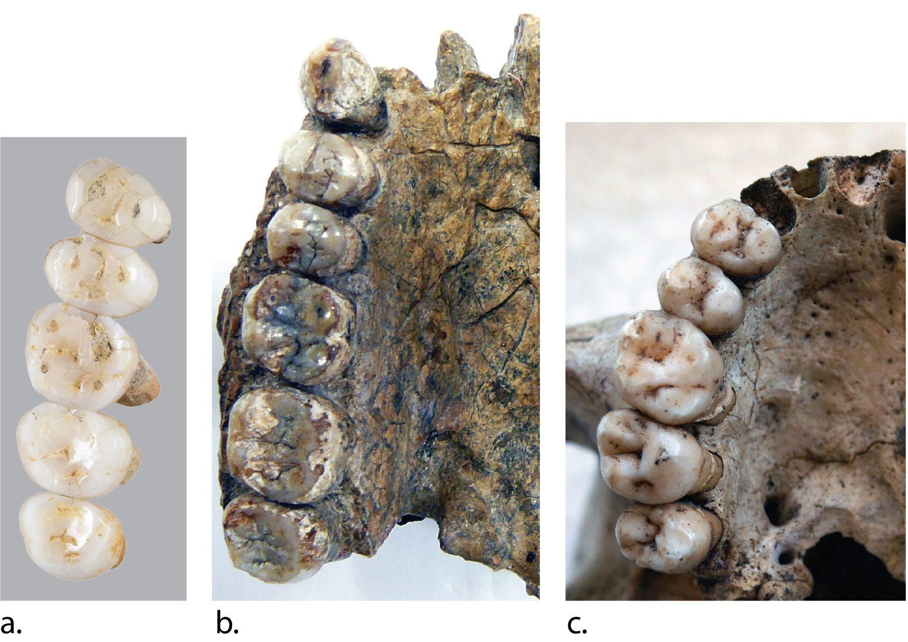 Descubren una nueva especie humana que habitó en Filipinas hace más de 50.000 años
