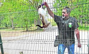 Vitoria ampliará el Centro de Protección Animal y lo abrirá a caballos, burros y cabras