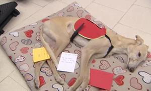 Una pionera terapia con perros para ayudar a los enfermos de ELA