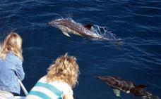 Nueva cita con los 'cetáceos a las 10'