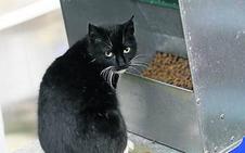 Etxebarri inicia una nueva campaña +para controlar las colonias felinas