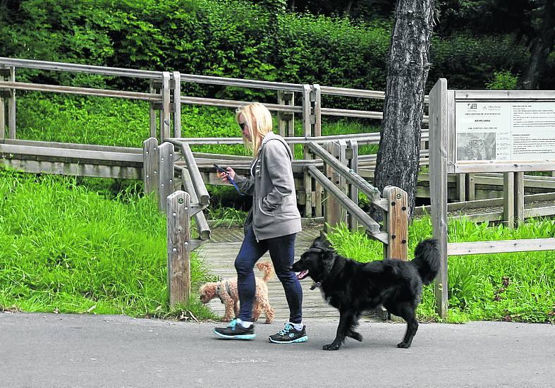 Erandio lleva diecinueve años sin actualizar el censo de perros