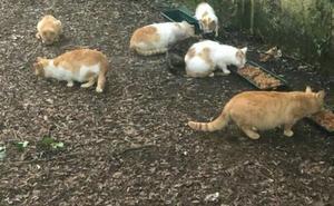 Amantes de los animales instan al Ayuntamiento a esterilizar a los gatos callejeros en Amorebieta