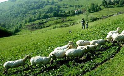 Los paisajes de la ruta de montaña del queso Idiazabal