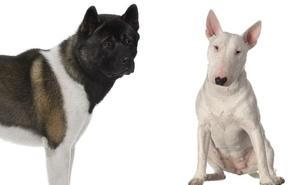 La moda de los perros peligrosos dispara el censo en Bilbao hasta superar el millar