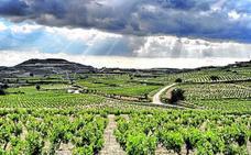 Viticultores de Rioja Alavesa buscarán frenar hoy el cambio de ABRA a Bodegas de Euskadi