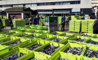 Las pescaderías no pueden absorber las 7.000 toneladas de anchoas descargadas en los puertos