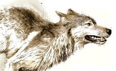 El Gobierno vasco protegerá al lobo con un plan de gestión que permita darles caza solo en casos «excepcionales»