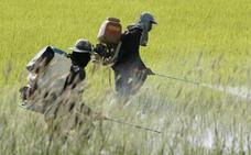 Los ecologistas denuncian que la administración autoriza el uso de pesticidas prohibidos