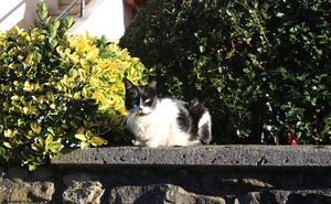 Exigen mejoras en el control de las colonias de gatos de Arrigorriaga