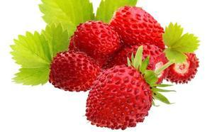 El regalo de las fresas silvestres